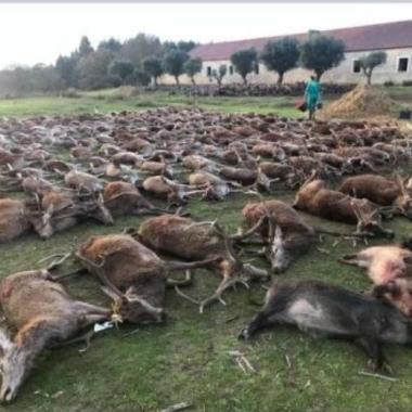 monteria 500 animales
