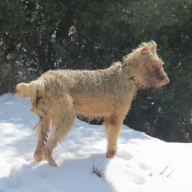 perro rehala nieve bajas temperaturas