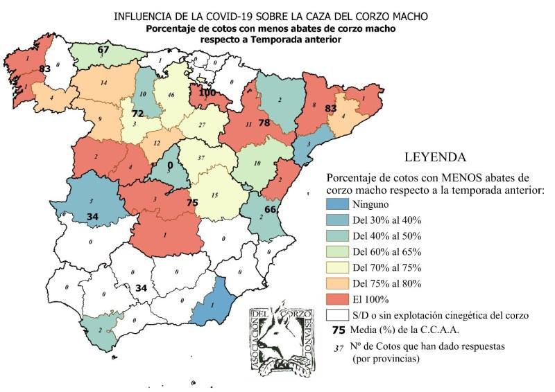 coronavirus corzo