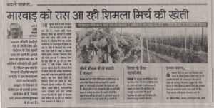 Capsicum Rajasthan patrika 16 February 2017