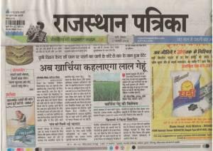 Rajasthan Patrika 1 February, 2016 Kharchia Wheat