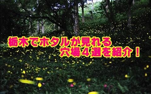 栃木県のホタルの見頃と穴場スポット4選!観賞のポイントも確認!