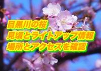 目黒川の桜の見頃とライトアップ情報2020!場所とアクセスを確認
