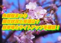 角館桜まつり2020開花状況と見頃は?駐車場とライトアップを確認!