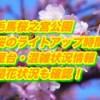 毛馬桜之宮公園の桜のライトアップ時間や屋台・混雑状況まとめ2019!開花・見頃も確認!