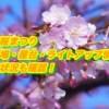 井原桜まつり駐車場・屋台・ライトアップ情報まとめ2019!開花状況も確認!