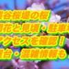 熊谷桜堤の桜2019/開花と見頃・駐車場・アクセスを確認!屋台・混雑情報も!