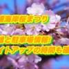 三浦海岸桜まつり2019/混雑と駐車場情報!ライトアップの時間も確認!