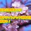 万博記念公園桜まつり2019/駐車場やライトアップ時間を確認!屋台情報も!