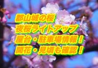 郡山城の桜2020夜桜ライトアップ・屋台・駐車場情報!開花・見頃も確認!