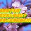 赤城南面千本桜2019/開花状況と見頃は?駐車場と渋滞回避の方法を確認!ライトアップと屋台で桜まつりを楽しもう!