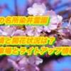 桜の名所染井霊園2019/見頃と開花状況は?駐車場とライトアップ情報!
