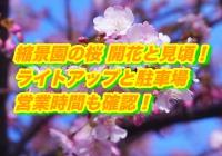 縮景園の桜2020開花と見頃!ライトアップと駐車場・営業時間も確認!