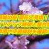 彦根城の桜2019開花と見頃!ライトアップ時間と屋台情報・駐車場や交通規制を確認!