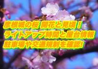 彦根城の桜2020開花と見頃!ライトアップ時間と屋台情報・駐車場や交通規制を確認!