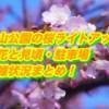 香山公園の桜ライトアップ2019/開花と見頃・駐車場や混雑状況まとめ!