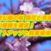 長居公園の桜2019/開花と見頃・桜の種類を確認!ライトアップと駐車場情報!