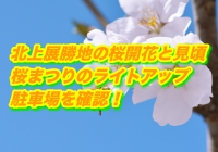 北上展勝地の桜2020開花と見頃!桜まつりのライトアップや駐車場を確認!