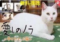 愛しのノラ幸せをはこぶ猫 映画動画無料視聴!Pandora・dailymotionも確認