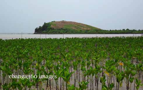 2013_0308_mangrove