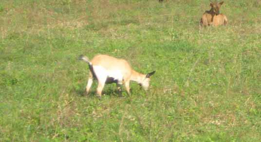 2014_0208_goats