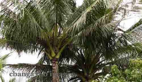 2015_0221_coconut