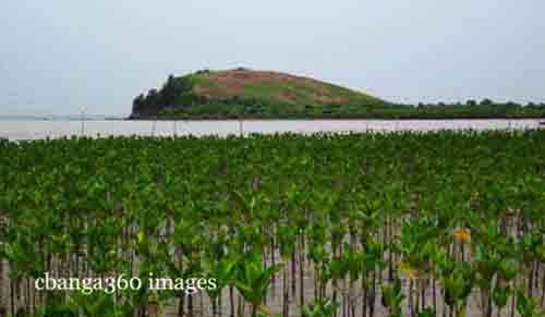 2015_0223_mangrove500