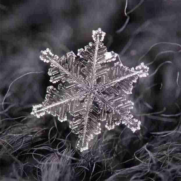 2016_0113_snowflakes6x
