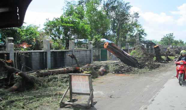 2016_0219_albay-tree-cutting