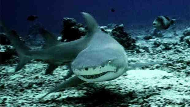 2016_0322_shark