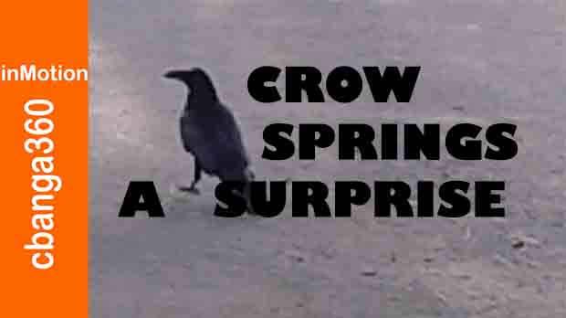 A Crow Springs April Surprise
