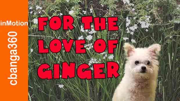Ginger Goes to Heaven in Springtime (in 4K)