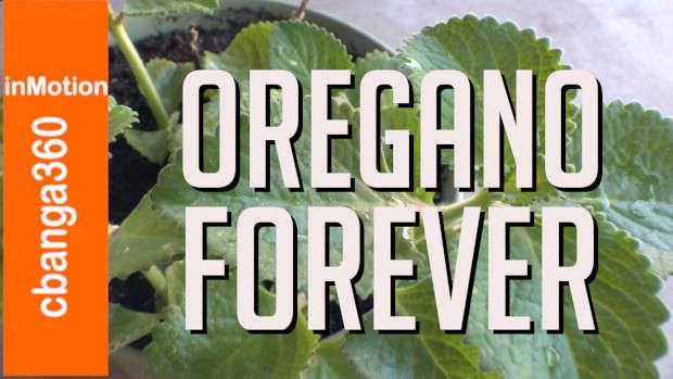 Oregano Forever