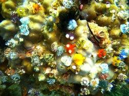 Colorful bristle worms