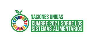El posicionamiento de MAELA Continental frente a la Cumbre de los Sistemas Alimentarios de la ONU