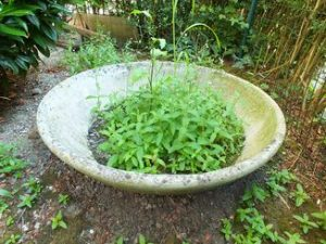 jardinière en fibrociment