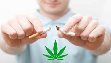 sevrage tabagique avec du cbd