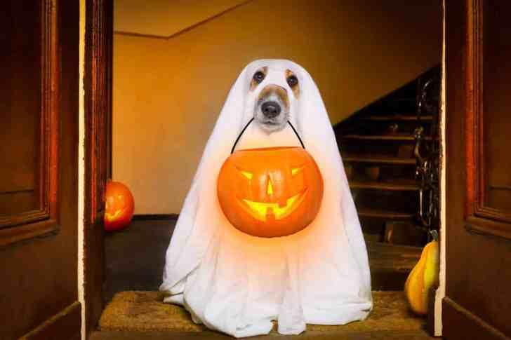 CBD Dog Health Halloween with Dogs
