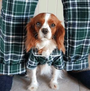 CBD Dog Health Pajamas Gift Guide
