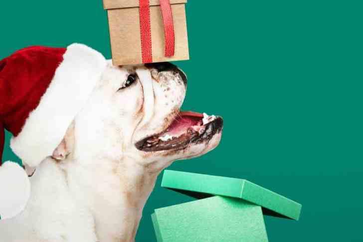 CBD Dog Health Dog Present