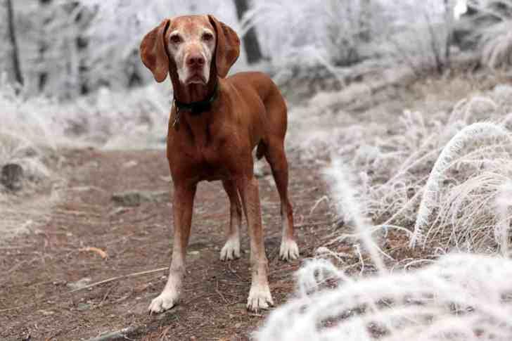 CBD Dog Health Winter Dog Cold Weather Pup