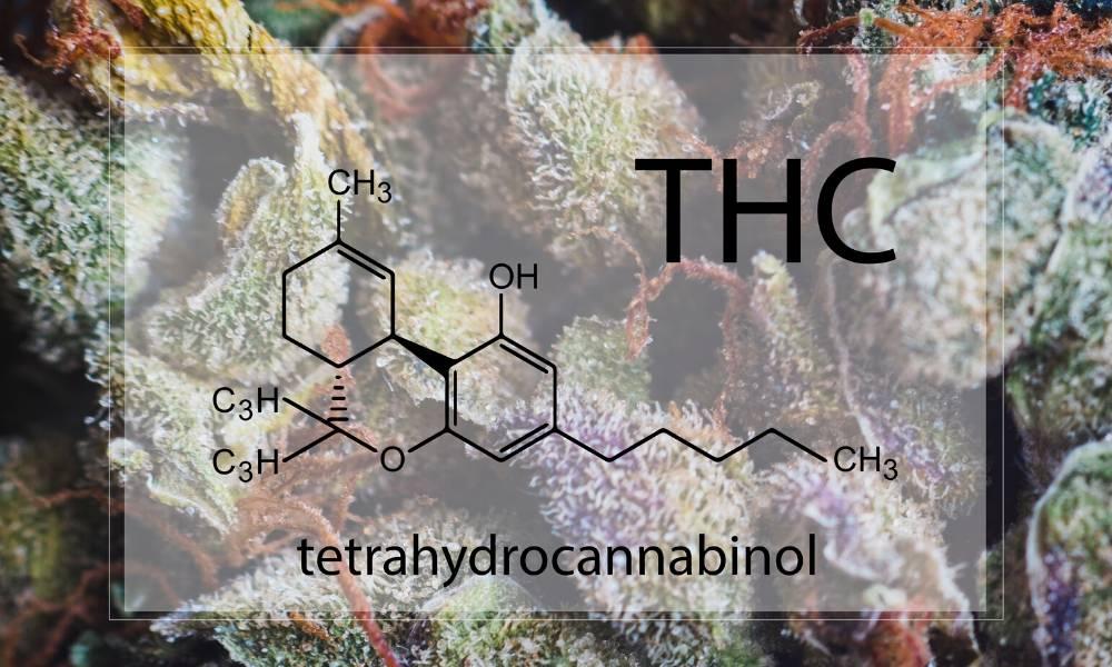Tyrimų rezultatai rodo, kad THC užteršta sperma gali būti dažno marihuanos vartojimo šalutinis poveikis 1