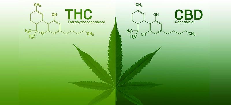 CBD vs THC reviews