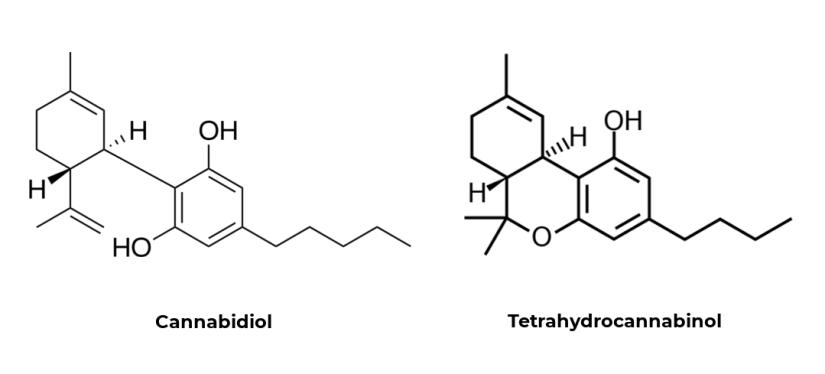 difference between cannabidiol and tetrahydrocannabinol