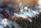 Medical Cannabis Wildfire