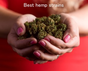 Looking to smoke hemp buds? Try the best hemp strains: From the Recreational CBD Weekly newsletter