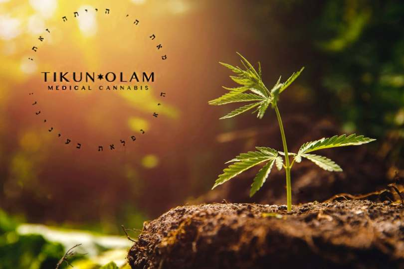 Tikun Olam Cannabis Coming to the United States