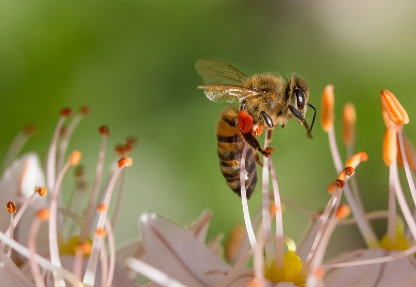 bees hemp flowers