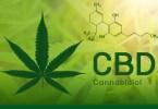 cbd high