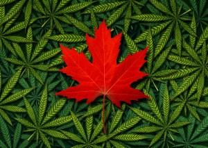 Aurora Canada Cannabis